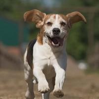 Hunde und Handy (4 von 4)