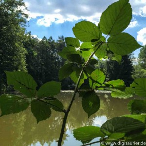 Wald und Teich (1 von 1)
