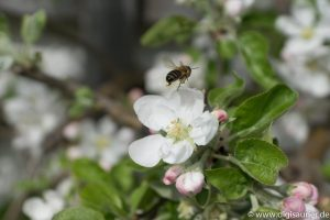 Bienen sind fleißig (1 von 1)