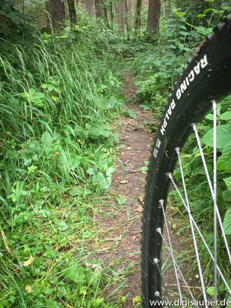 Noch ein Single Trail - und das ist erst der Einstieg. Weiter hinten kamen die nassen Wurzeln. Kein Spaß ohne Übung!