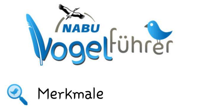 Eine lehrreiche App: Der Nabu-Vogelführer