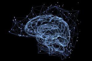 Das Hirn, ein neuronales Netz