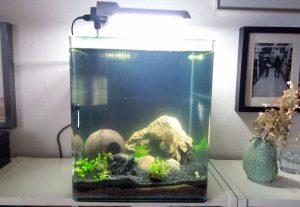 Alexa, schalt das Licht am Aquarium aus!
