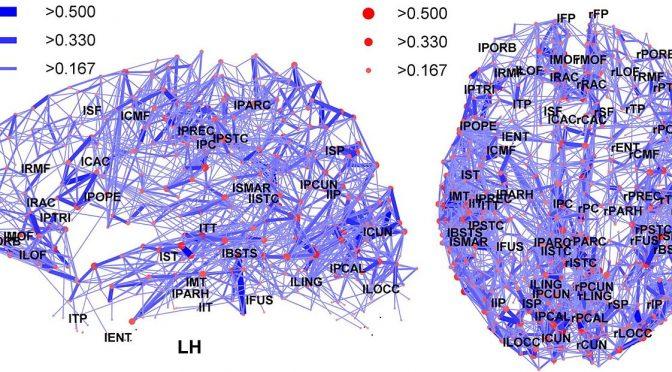 Die neuronalen Netze im menschlichen Hirn (Foto: Wikimedia - siehe Bildnachweis unten)